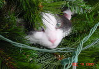 Orea liked the Christmas Tree